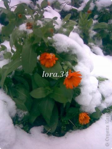 """Моя новая работа """"РЫЖИКИ"""", связана с фото, который сделал мой папа у себя возле дома, мне так понравились оранжевые ноготки под снегом, это так необычно для нашей местности, что мне захотелось сделать такие же солнечные и оранжевые цветочки, правда без снега и небольшими веточками.Вся работа 30см*24см. фото 2"""