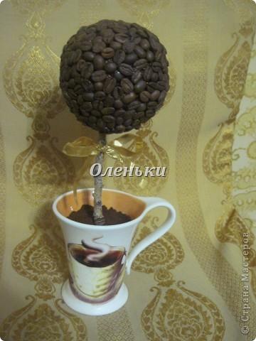 Теперь и у меня есть кофейное дерево!  Хотя и не надолго.... Это подарок. Так что себе нужно будет обязательно сделать! фото 1