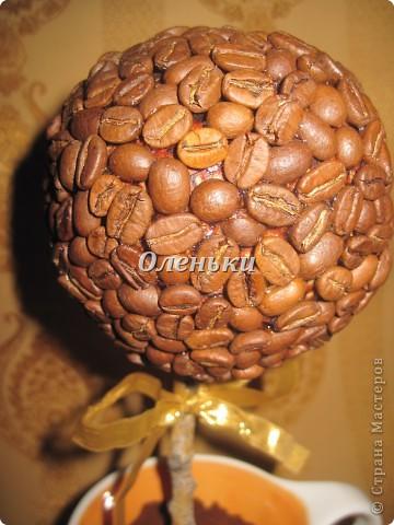Теперь и у меня есть кофейное дерево!  Хотя и не надолго.... Это подарок. Так что себе нужно будет обязательно сделать! фото 5