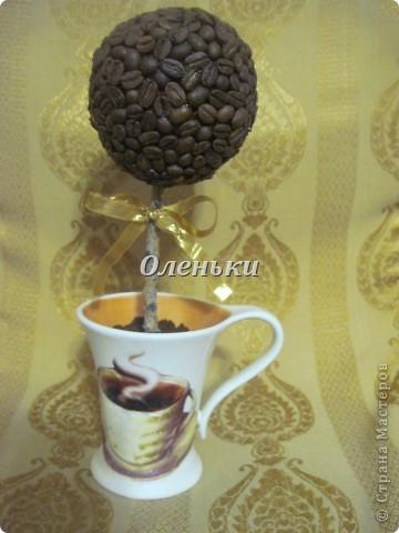 Теперь и у меня есть кофейное дерево!  Хотя и не надолго.... Это подарок. Так что себе нужно будет обязательно сделать! фото 6