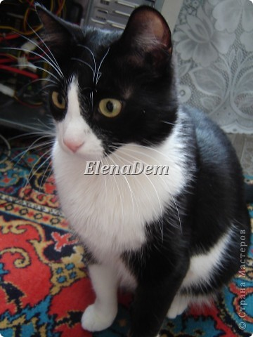 Кошачьи фото 9