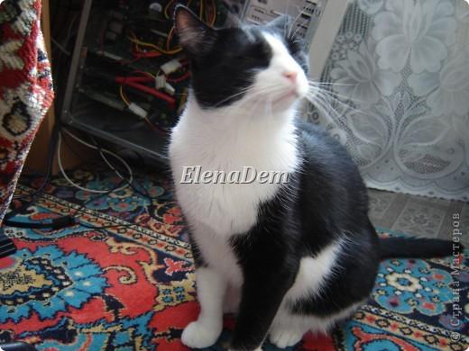 Кошачьи фото 10