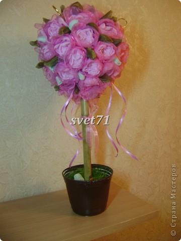 Розовее розового))Европейское дерво. фото 1