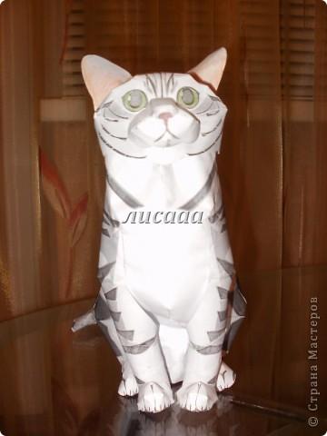 С первым днём весны, мастерицы и мастера!!! И международным днём кота!!!!Сегодняшний  день прошёл плодотворно. Теперь у меня живёт еще один кот.  фото 1