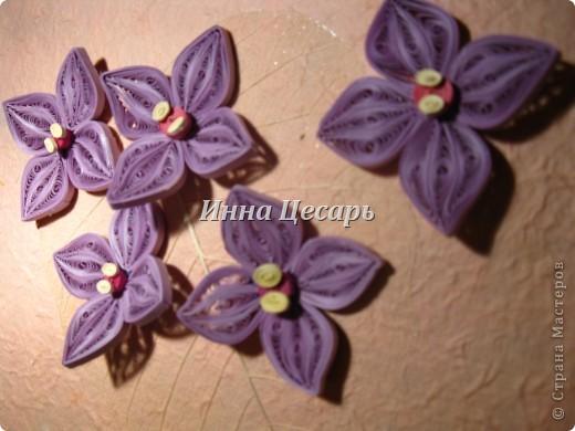 Фиолетовые цветы фото 1