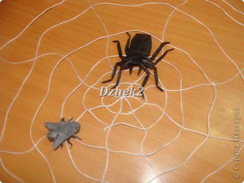 Всякие насекомые фото 2