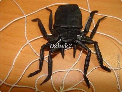 Всякие насекомые фото 3