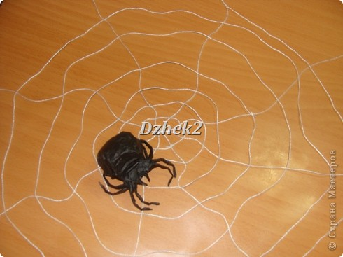 Всякие насекомые фото 5