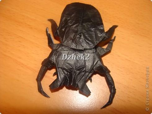 Всякие насекомые фото 13