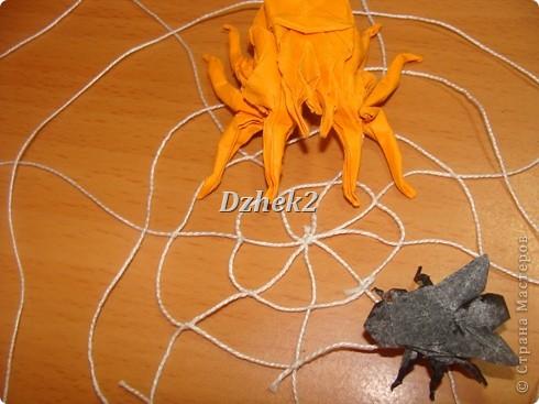 Всякие насекомые фото 15
