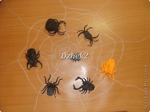 Всякие насекомые фото 16