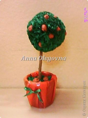 Апельсиновое дерево. фото 1