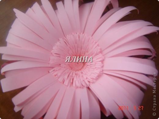 Цветут цветы... скворчат скворцы... фото 7