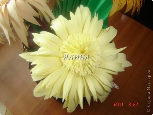 Цветут цветы... скворчат скворцы... фото 3