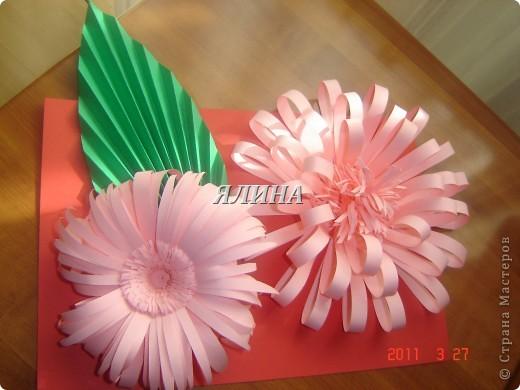 Цветут цветы... скворчат скворцы... фото 8