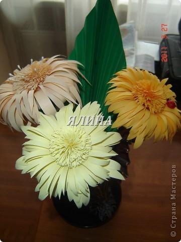Цветут цветы... скворчат скворцы... фото 6