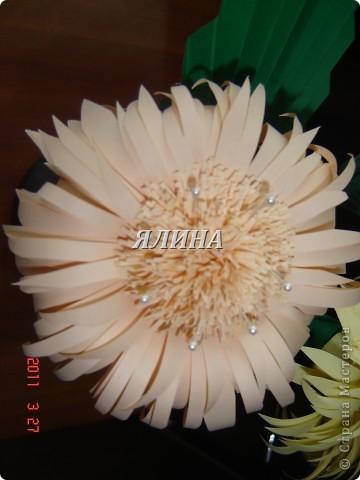 Цветут цветы... скворчат скворцы... фото 5