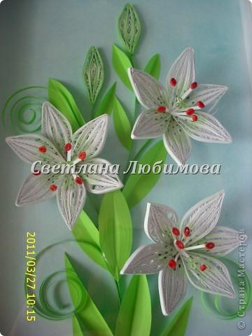 Работу сделала , находясь под впечатлением от лилий Пылинки. Спасибо вам за понятный и полезный МК! Накрутила цветы за один день. фото 1