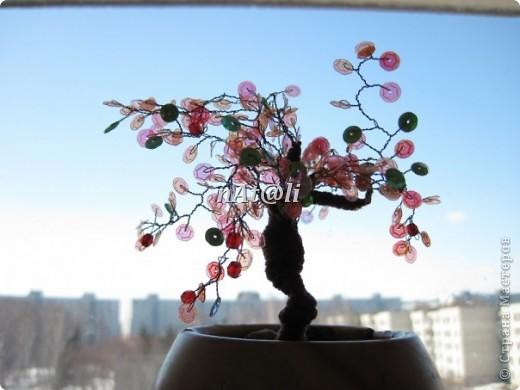 Моё первое деревце и две ягодки фото 2