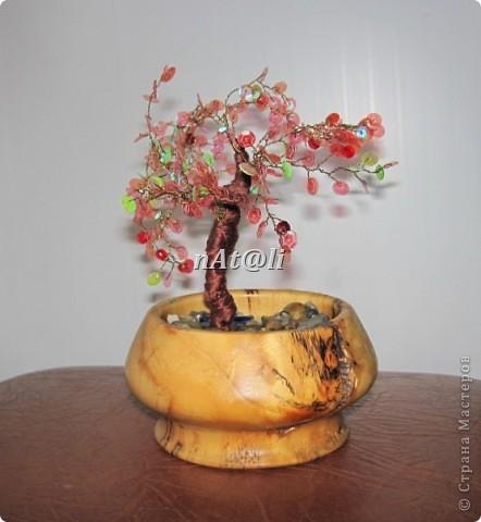 Моё первое деревце и две ягодки фото 3