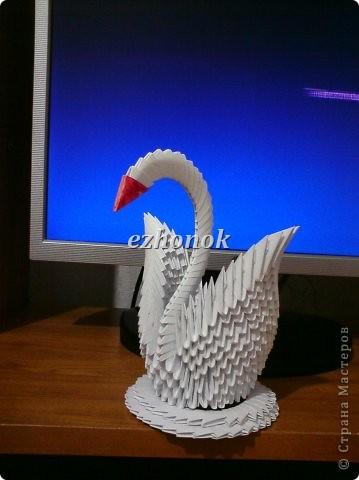 Первый Лебедь фото 1