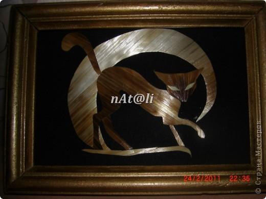 котик  фото 3