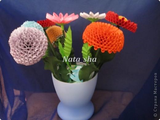 Мои цветочки фото 2