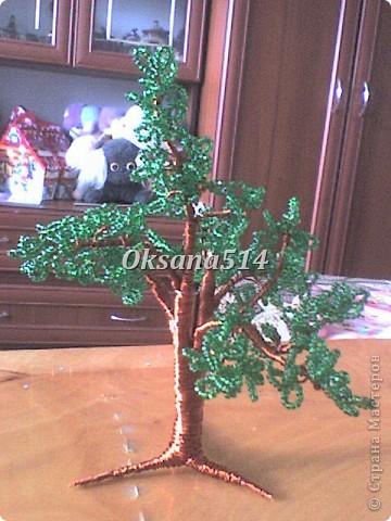 Мое первое деревце  фото 1