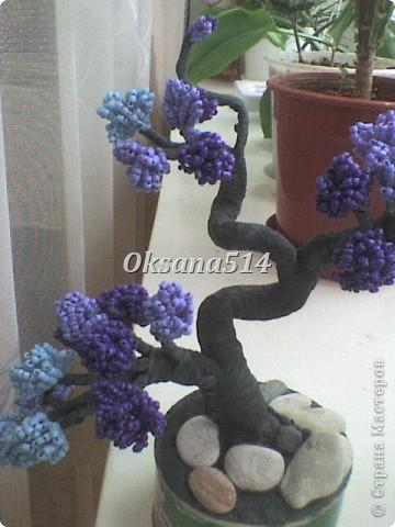 Мое первое деревце  фото 3