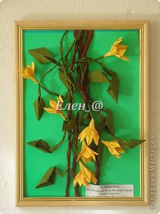 Кампсисс- цветок -лиана фото 1
