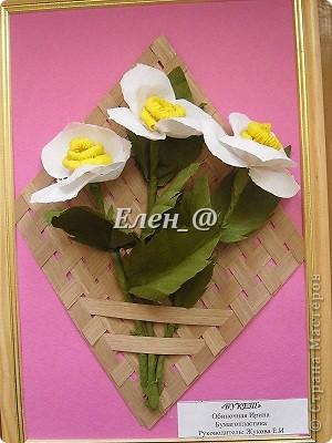 Кампсисс- цветок -лиана фото 7
