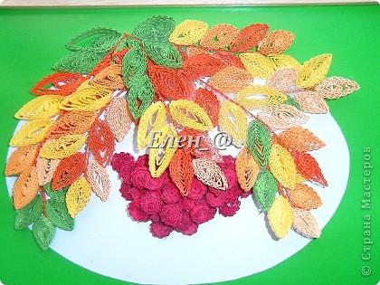 Кампсисс- цветок -лиана фото 2