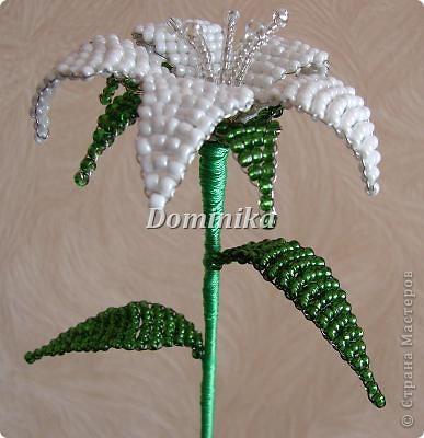 белая лилия фото 3