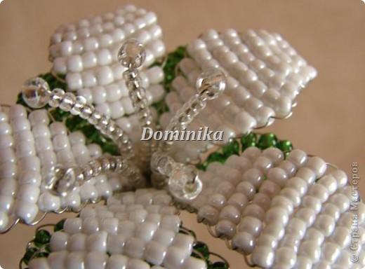 белая лилия фото 6