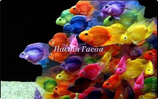 Это моя сырная рыбка)))) фото 3