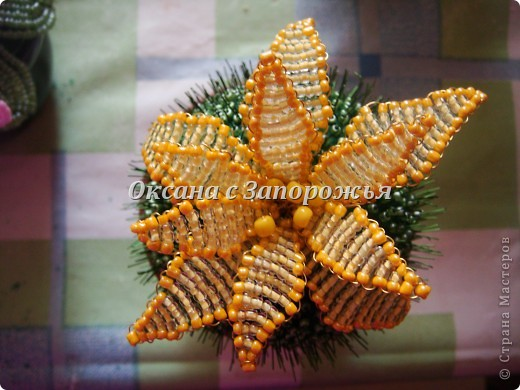 Бисерный кактус фото 3