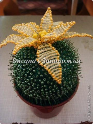 Бисерный кактус фото 2