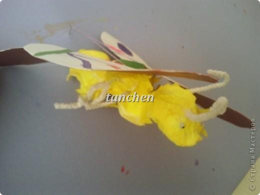 Бабочки, сделанные ребятами 5-6 лет, обклеили бабочки скрученными в шарик гофробумагой фото 3