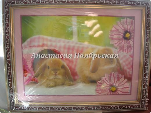 Мои кролики не только ценный мех!!!! и мое хорошее настроение!!! фото 4
