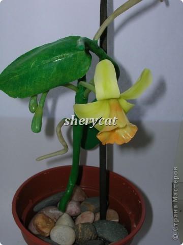 ванильная орхидея самостоятельного изготовления, как положено, с воздушными корнями и бутонами. фото 1