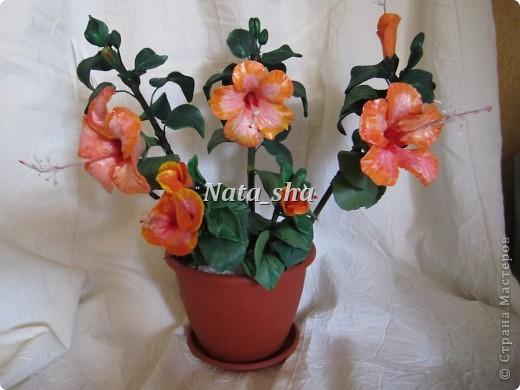 """Приветик всем ) Есть в моем цветочном хозяйстве чудесный Гибискус ,решила так сказать """"поподражать"""" природе.Что у меня получилось - судить вам)) фото 1"""