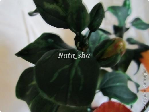 """Приветик всем ) Есть в моем цветочном хозяйстве чудесный Гибискус ,решила так сказать """"поподражать"""" природе.Что у меня получилось - судить вам)) фото 5"""