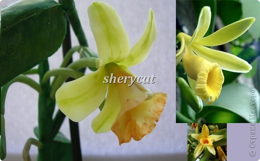ванильная орхидея самостоятельного изготовления, как положено, с воздушными корнями и бутонами. фото 2