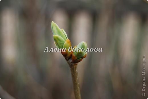 Естественная природа фото 6