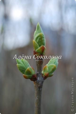 Естественная природа фото 8