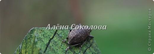Естественная природа фото 14