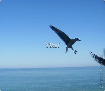 Не на долго удалось слетать в Болгарию,привезла для Вас от туда море.... фото 10