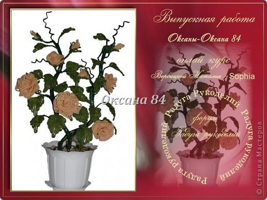 Это мой долгожданный куст роз,сделанный под чутким руководством Sophia.Наташенька,еще раз огромное спасибо за то,что ты у нас есть и делишься своими знаниями!!! фото 2