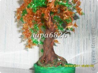 УРА!!!У меня деревце выросло. фото 8