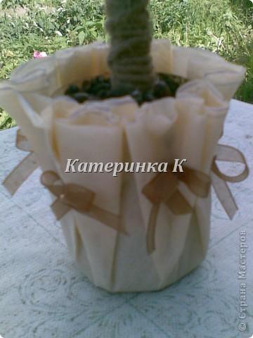 кофейное дерево. Ленты из органзы и палочка корицы фото 2